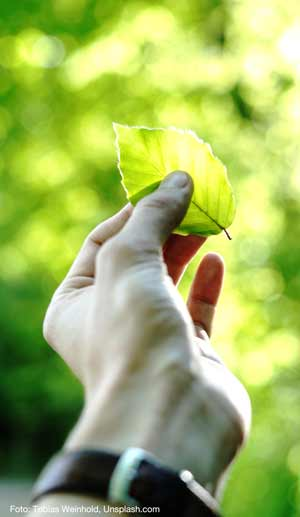 Nachhaltige Investments Bild 2